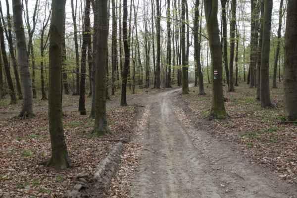"""Konečně lesní cesta, jenže tady jsem byla špatně. Ostatní čekali na vedlejší odbočce """"za zatáčkou""""."""