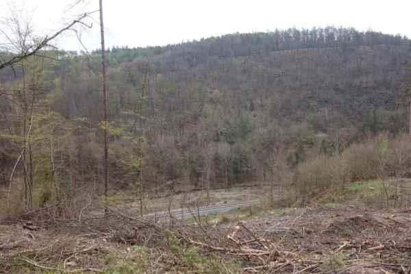 Víc nás zaujal výhled do údolí Bojovského potoka, který se otevřel díky vykácenému porostu.