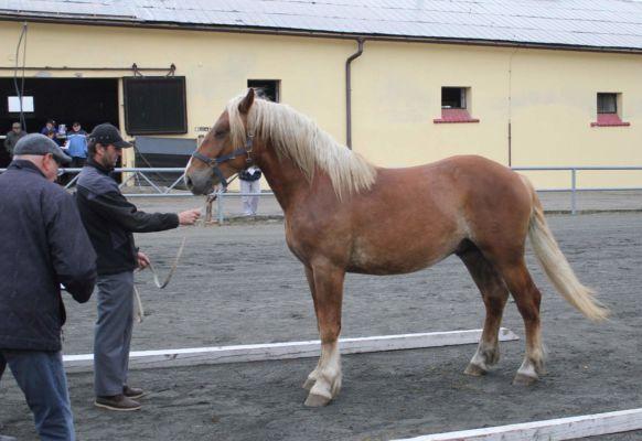 Amír mořkovský po 1839 Amír žlutavský