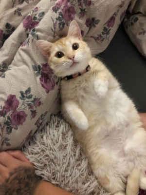 4.12.2020 - Z domova Skyler - V úterý nás tahle malá bojovnice opustila a přešla do kočičího nebíčka kde ji už nic nebolí. ...