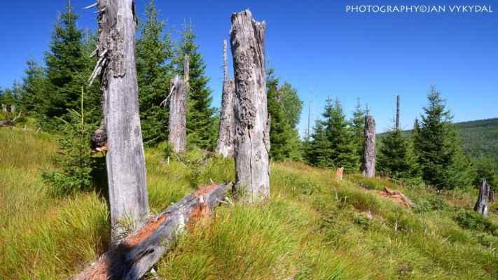 NP Bavorský les