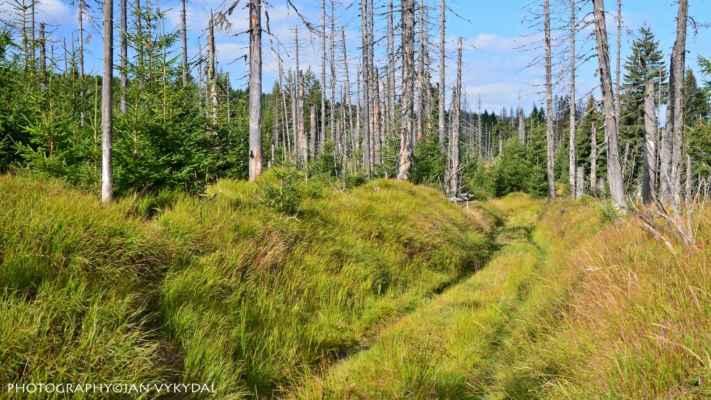 Šumavská divočina