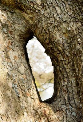 Některé stromy neví co by.