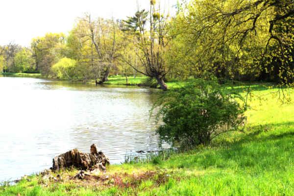 Lednice, Zámecký rybník, nebo také Národní přírodní rezervace Zámecké rybníky.