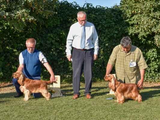 SUKY/FEMALE - TRIEDA MLADÝCH/JUNIOR CLASS 54KEY'LA BLUE VALLEY OF DOGS, PKR.VIII-41169, 29.09.2020  O: AMBER RICCI CLUB M: XENIA BLUE VALLEY OF DOGS CH: BRZEZIŃSCY RENATA WALDEMAR MAJ: BRZEZIŃSCY RENATA WALDEMAR  V1, CAJC, Víťaz ŠV mladých / Exc 1, CAJC, Specialty club junior winner  52COCO CHANEL Z VEJMINKU, CLP/AC/39677, 03.04.2020  O: ORLANDO Z VEJMINKU M: JAKARTA Z VEJMINKU CH: ŠULCEK PAVEL MAJ: ŠULCEK PAVEL  V2 / Exc 2