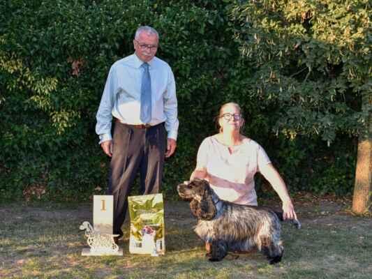 30TIMMY MORAVIA MYSTERY, CLP/AC/37817, 22.09.2015  O: BLUE BENDER BLACK PETRS M: MAGGIE MORAVIA MYSTERY CH: BABKOVÁ JANA MAJ: HAJDUŠÍKOVÁ EVA  V1, najkrajší pes z tried čestných / Exc 1, Best honour class male