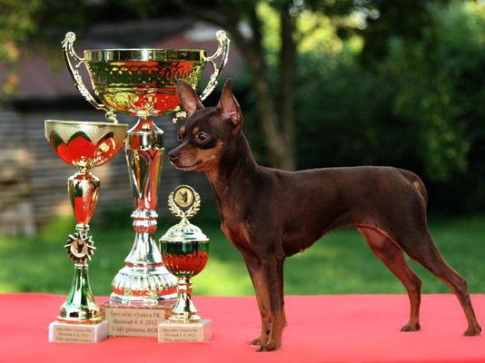Vítěz plemene BOB, Vítěz speciální výstavy 2012 - Vítěz plemene - Aennie Brown Jongal