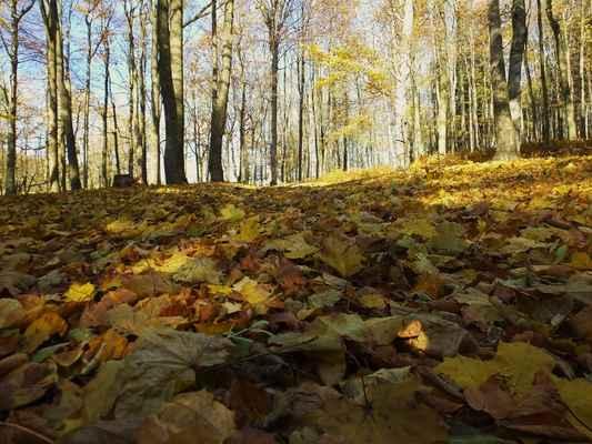podzim v lužických horách...