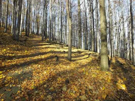 hlavním důvodem ochrany je unikátní smíšený, převážně bukový les, který je charakteristický pro oblast lužických hor. jeho druhová skladba nebyla zásahem člověka výrazně ovlivněna...