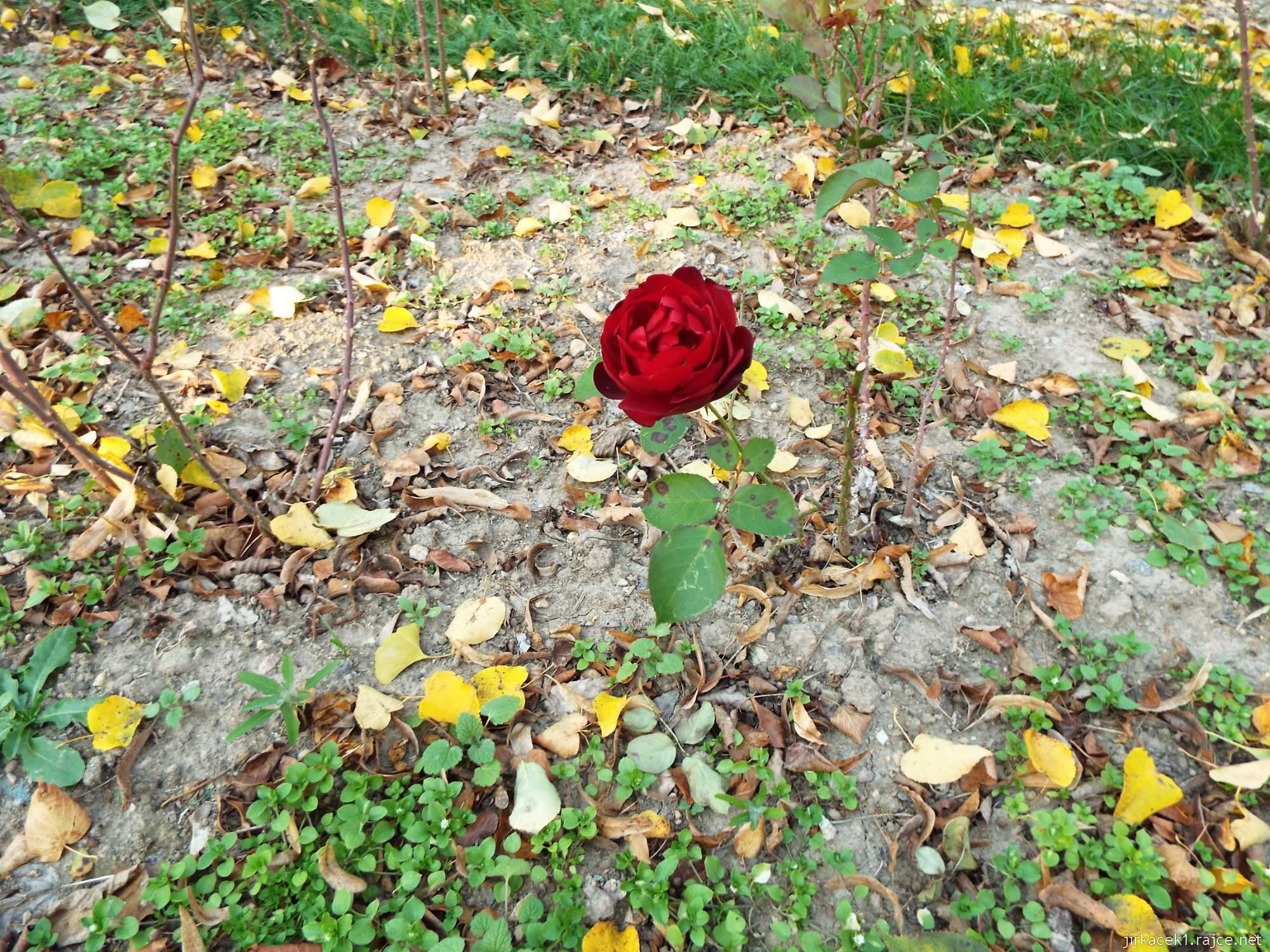 Růžový palouček u Litomyšle - růžový záhon