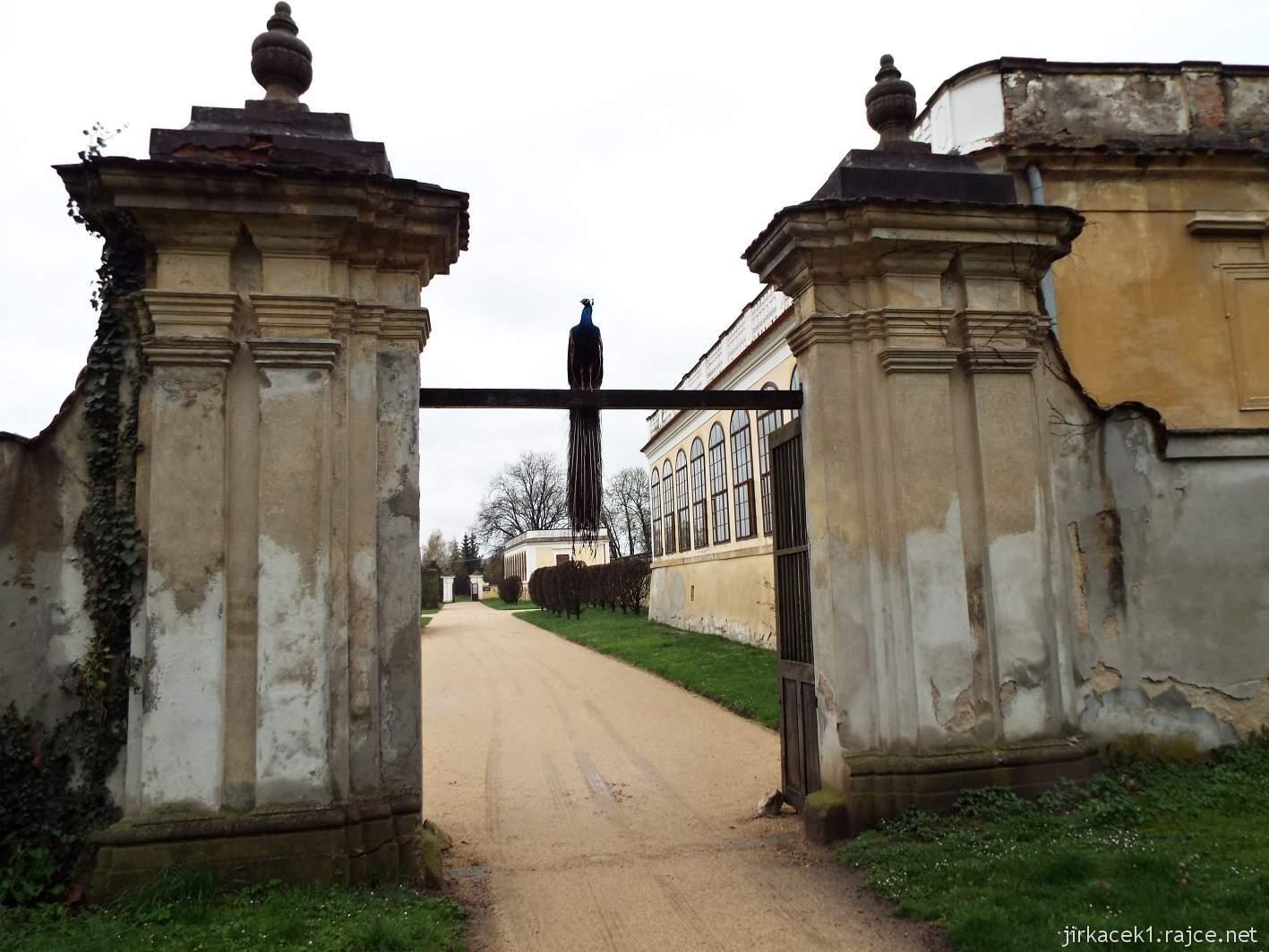 zámek Milotice 86 - páv na bráně pod oranžerií