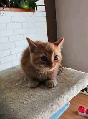 24.5.2020 - Oznamovatelka z Hovoran nám oznámila, že našla na zahradě v psí boudě kočku s koťaty, neví co dělat. Po domluvě jsme kočku zavezli na kastraci a u domu zůstane. Koťata jsme naočkovali a hledáme jim domov. Jsou to Cedrik, Cilka, Damián, Marlon a Ola.