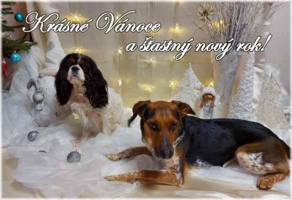 Srdečně zdravíme a přejeme krásné Vánoce a hlavně zdraví a štěstí v novém roce. Dayleenka Diva Decora Leawil