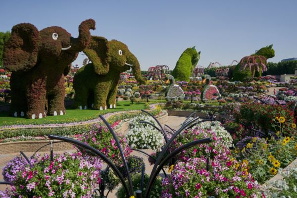 Miracle Garden - Miracle Garden v Dubaji