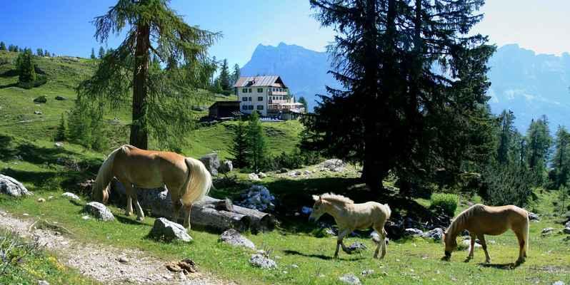 ...i koňská rodinka si vyšla na procházku...