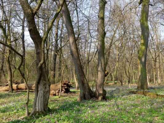 Les je v přírodní rezervaci ponechaný samovolnému vývoji a je to tu moc hezké.