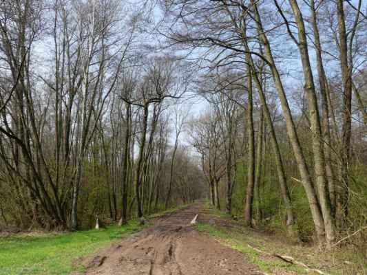 Místní poznají, kde jsem vyšla na louku. Ale chyběl mi tu na okraji louky u cedule strom, takový veliký, pak ho asi rozštípl blesk a teď už zbyl jen pařez - nebo si to místo pletu? :-(