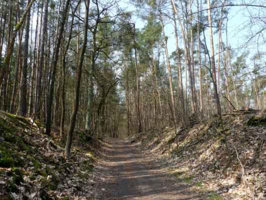 """Na červené značce má les zase jiný charakter, ale taky byl celý rozezpívaný a """"roztlučený"""" strakapoudy."""