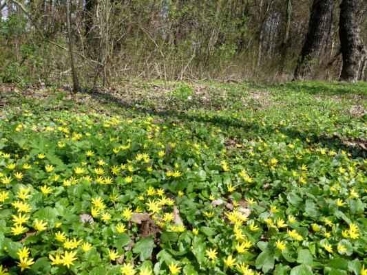 Žluté kytky se mi fakt fotí blbě.