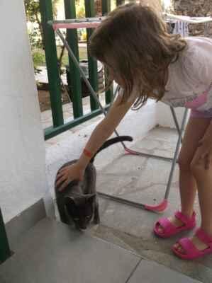 Krétská kočka + česká holka.