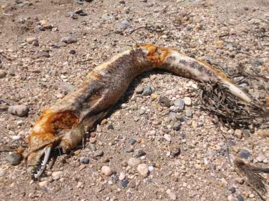 Moře vyvrhlo tělo mrtvé Murény.